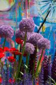 Allium in urban garden