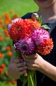 Girl holding dahlia flowers