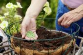 Making hanging basket