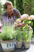 Man planting Hydrangea