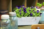 Plants in old cabinet