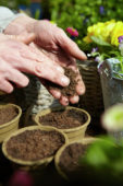 Filling pots with soil