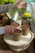 Placing pots with sown seeds in cold frame