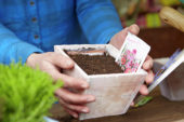 Sowing seeds in pot