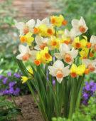 Narcissus Bittern, Cha-Cha