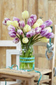 Tulipa Creme Flag, Flaming Flag