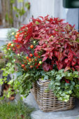 Autumn container