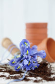 Irisses on trowel