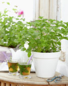 Mixed herbs, mint