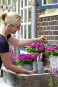 Woman watering petunia