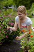Woman planting Geum in border