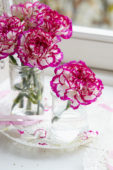 Dianthus on vase