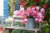 Tulipa Light and Dreamy