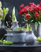 Wax amaryllis bulbs