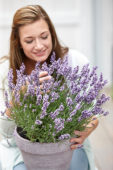Lady with Lavandula angustifolia