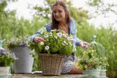 Lady picking Petunia flowers