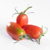 Solanum lycopersicum, pomodori tomato
