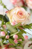 Rosa arrangement