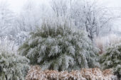 Frosted bamboo