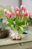 Tulipa Canasta bulb bouquet