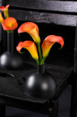 Zantedeschia on vase