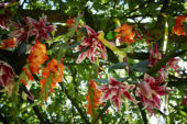 Summer flowers hanging in tree
