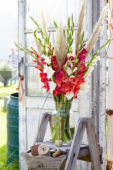 Gladiolus bouquet