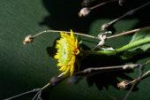 Still life of flower