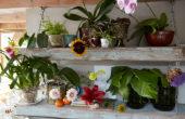 Planten assortiment
