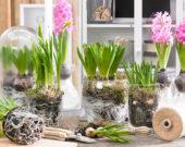 Voorjaarsbloemen indoors