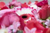 Bloemen gemengd