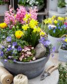 Spring flower mix