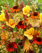 Perennial flower mix