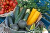 Zucchini collection