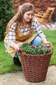 Young lady with bulbs and pansies in basket