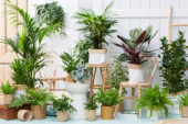 Indoor plants collection