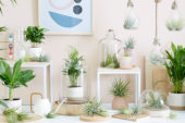 Tillandsia collection