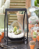 Dutch 	   	  	  	   	  	  	   	  	  	   	  	  	   	  	  	   	  	  	   	  	  	   	  	  	    	  	  	   	  	    	  	  	     	  	  	    	  	  	 Dutch 	   	  	  	   	  	  	   	  	  	   	  	  	   	  	  	   	  	  	   	  	  	   	  	  	    	  	  	 =   	  	  	     	  	  	    	  	  	 Dutch 	   	  	  	   	  	  	   	  	  	   	  	  	   	  	  	   	  	  	   	  	  	   	  	  	    	  	  	 Cactus combinatie in glas