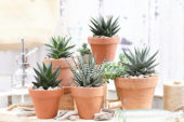 Aloe collection