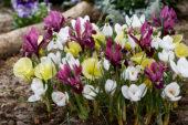 Voorjaarsbloemen gemengd
