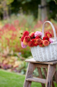 Basket with Dahlias