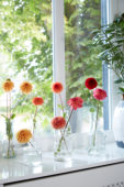 Dahlias on vases