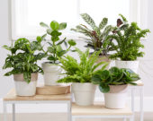 Air purifying indoor plants collection