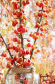 Crab apples on vase