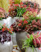 Autumn containers