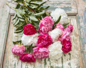 Peonies Mix Dinnerplate