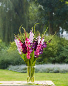Gladiolus Purple and Pink Mix