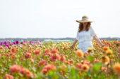 Lady walking through dahlia field
