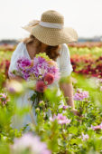 Lady holding bunch of dahlias