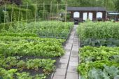 Allotment with vegetable beds
